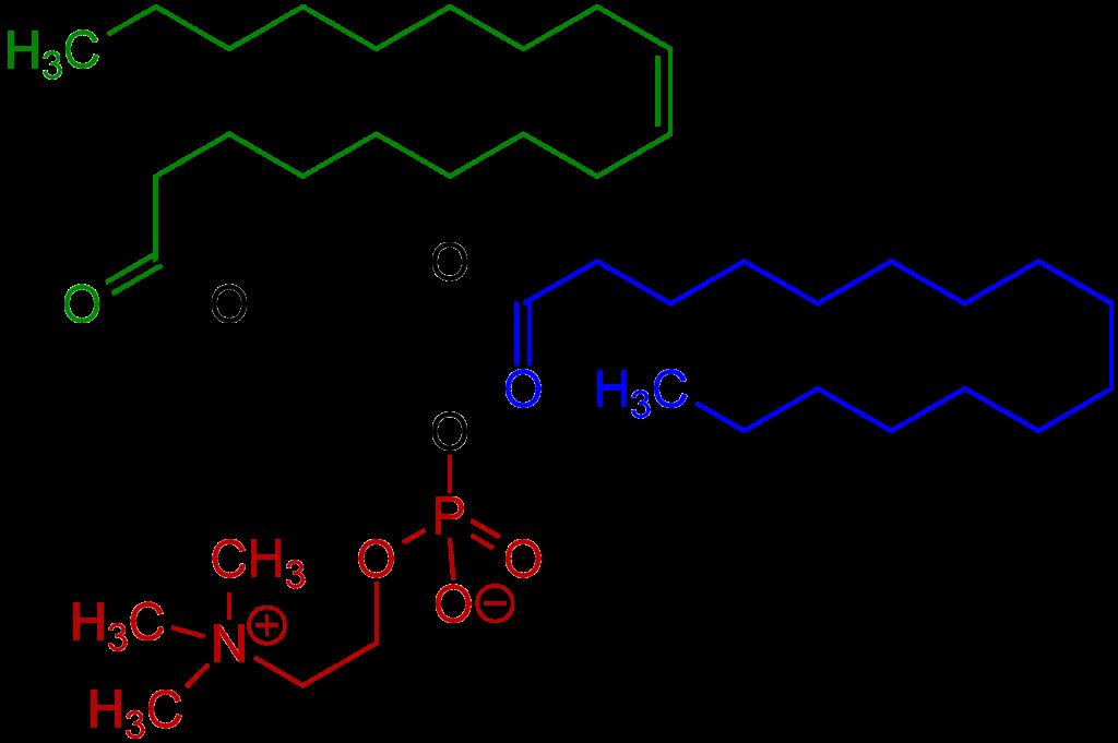 Lecitina, um fosfolipídeo