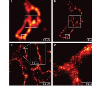 NOBEL 2014: a super microscopia de fluorescência