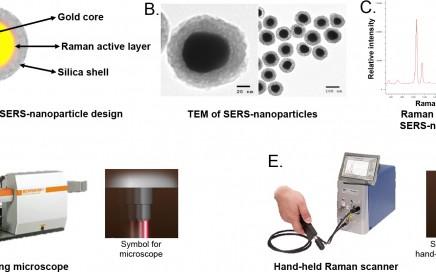 Veja a ilustração do mecanismo de ação das nanopartículas .