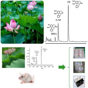 Descoberta: folhas de Lotus são hipnóticas e sedativas