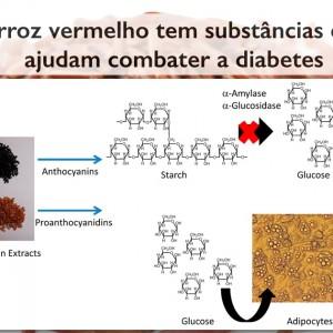 Descoberta: arroz vermelho é antidiabético e ajuda emagrecer
